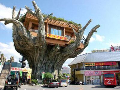 Restoran diatas Pohon