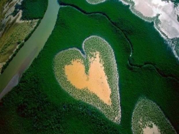 Hutan membentuk gambar hati