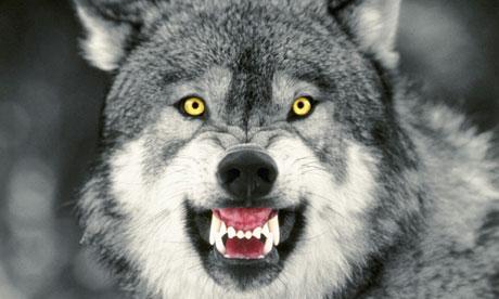 Serangan Serigala di kota Paris