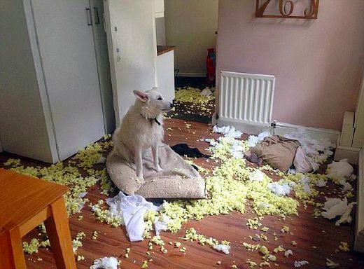 Yodie, Anjing Paling Nakal di Dunia