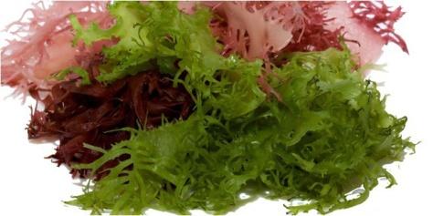 Manfaat Luar Biasa dari Tanaman Rumput Laut untuk Kesehatan Anda