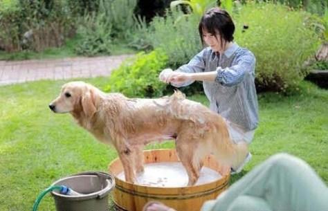 Foto Krystal Fx Sedang Memandikan Anjing