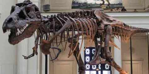 Kerangka Dinosaurus yang Pernah Dicuri