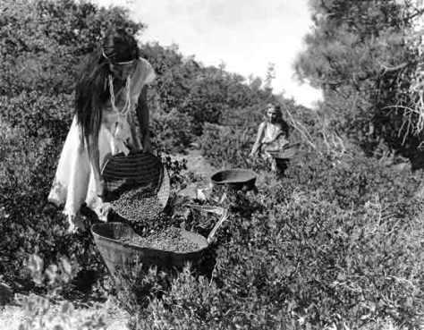 Sejarah Penting Suku Indian Yokuts