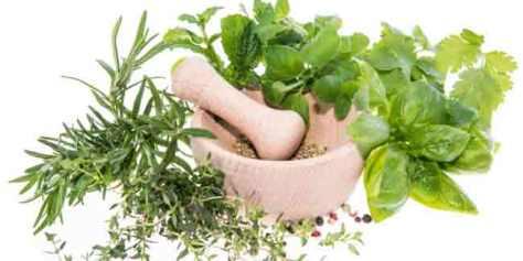 Tanaman herbal yang banyak terdapat di dapur